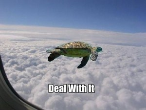 a.baa-Flying-Turtle-Deal-with-it